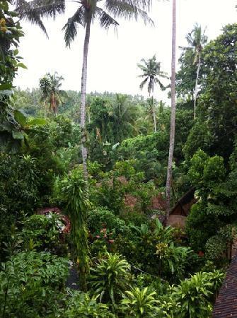 Shankari's Bali Retreat: view from lotus star room