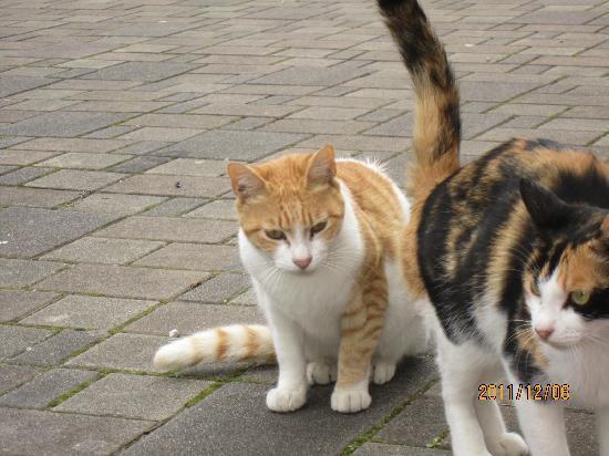 Spa World Hotel : 駐輪場付近の野良ネコ君 誰か餌やってね