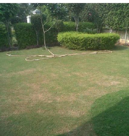 Paradise Green: Lawn inside Villa