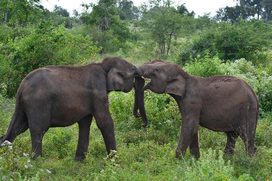 Udawalawe National Park: Affection