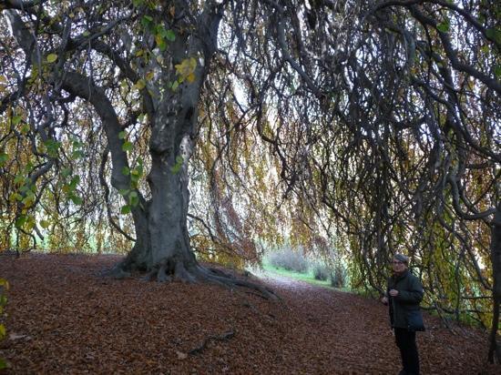 Varese, Italia: un albero da favola!