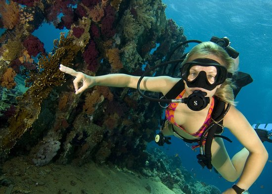 Ocean college dive centre sharm el sheikh egypt top tips before you go tripadvisor - Best dive trips ...