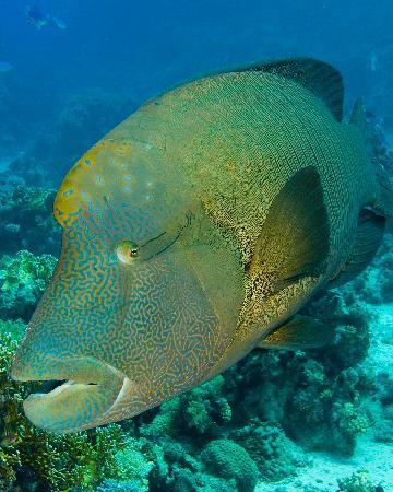 Ocean College Dive Centre