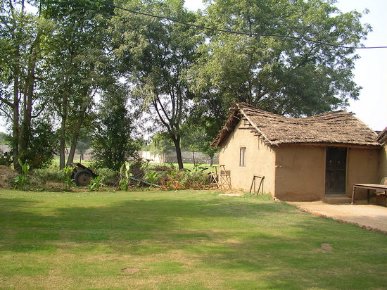 Saharia Organic Resort : Traditional Rajasthani mud cottage with a thatched roof.
