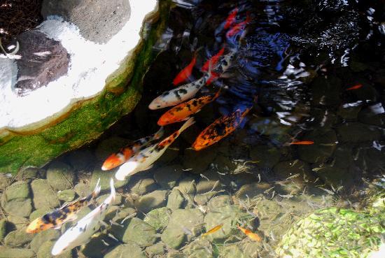 Estanque con peces fotograf a de hotel parque tropical for Blower para estanques de peces