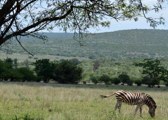 Izintaba Private Game Reserve: Izintaba Reserve