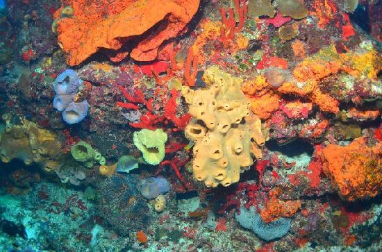 Mayan Aqua Dive: Reef Dive