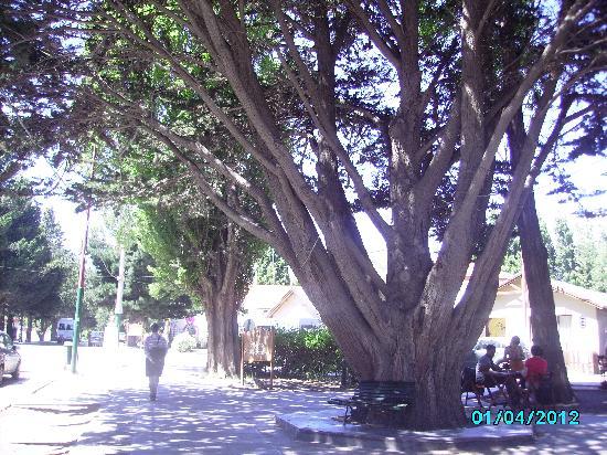 Altos de la Costanera - Aparts: calle del centro