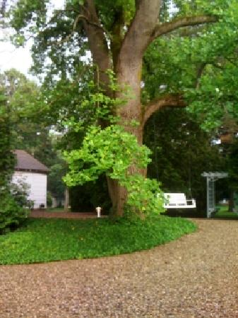Rabbit Run Inn: Our century old tulip tree greets visitors to Rabbit Run