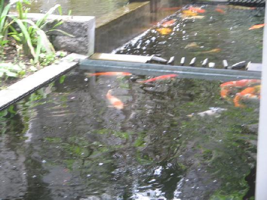 Kolam Ikan Lantai 2