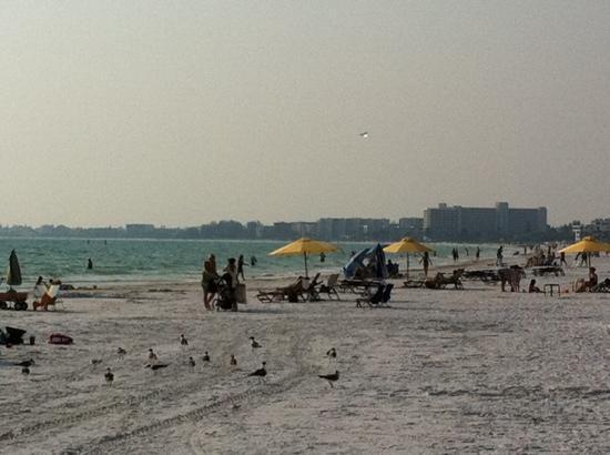 Tropical Beach Resorts: Cresent Beach, Siesta Key