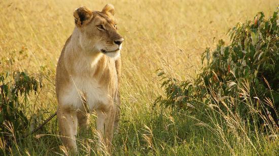 Mara Intrepids Luxury Tented Camp: Mara