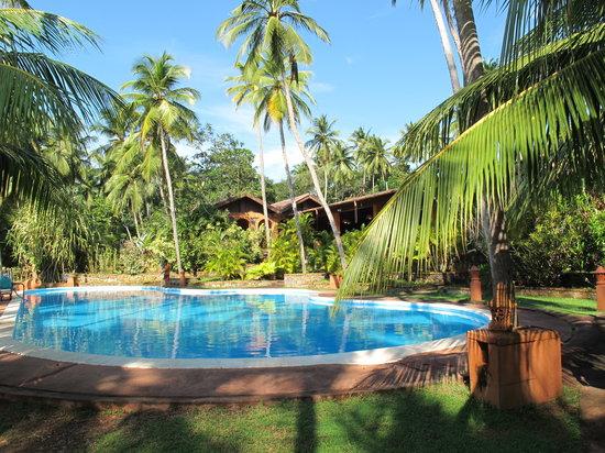 Eva Lanka Hotel: бассейн у нижнего бунгало