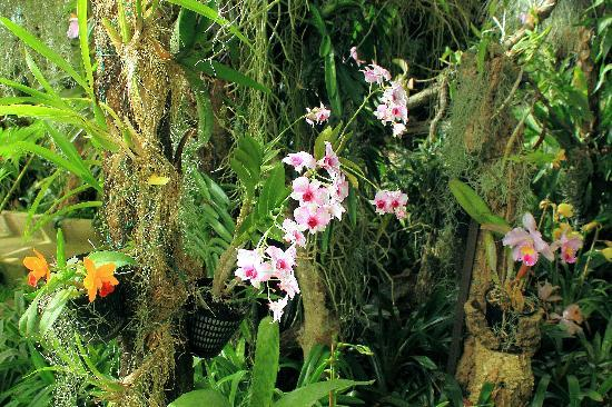 Pregetter's Orchid Garden: Orchids in the jungle