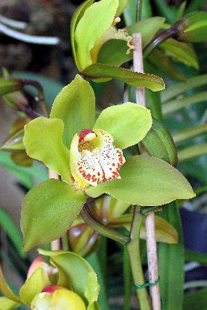 Pregetter's Orchid Garden: I loved this one!