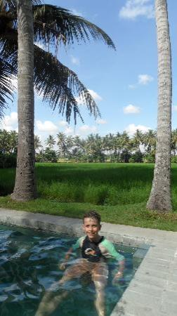 Bali T House: View from the Pool