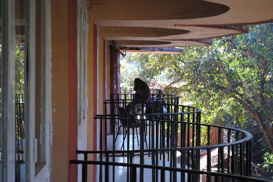 Hotel Gitanjali: Monkeys in the balcony plotting their next move.