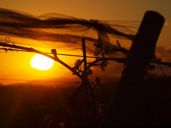 Sunset Meadow Vineyards: Enjoy our Sunsets