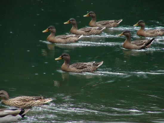 Pellizzano, Italie : Lago dei Caprioli- bagnanti...