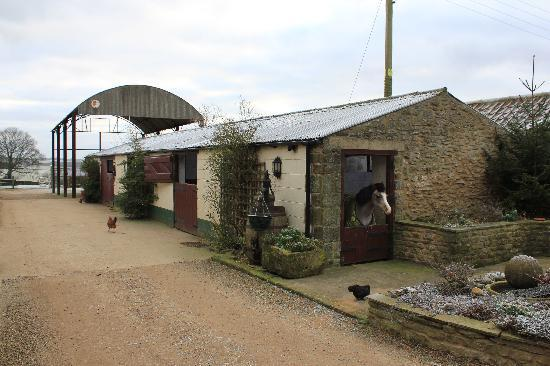 Rectory Farm and Holiday Cottages: The farmyard