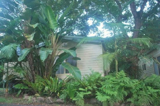 Mt Warning Rainforest Park: Mt Warning Caravan Park