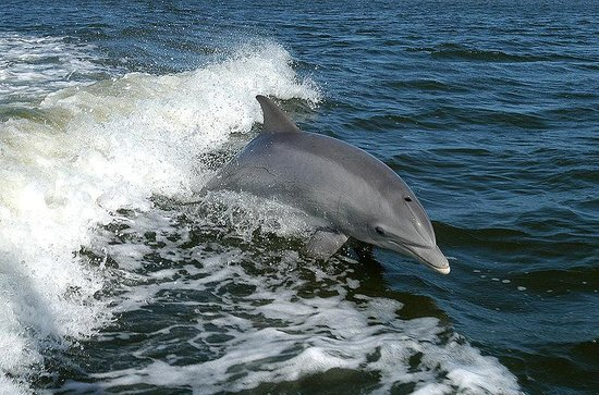 ‪Capt Johnny's Outer Banks Dolphin Tours‬