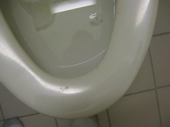 Econo Lodge Florence: Nasty toilet seat