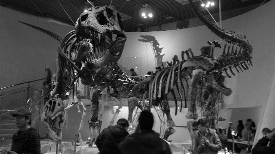 Taito, Japón: Dinosaurs