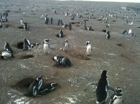 B&B La Nona: Don't miss visiting the penguins on Isla Magdalen!