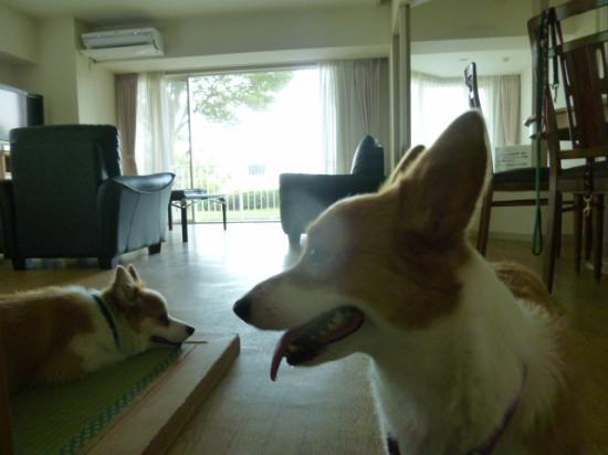 Hotel Village Izukogen : 広いお部屋でのんびり