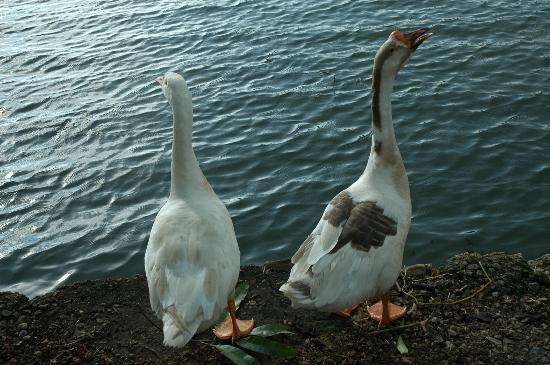 Lake Haven Island Resorts: Lake haven,s pet