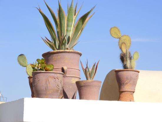 Riad Villa Harmonie: Some of the many potted plants and cacti