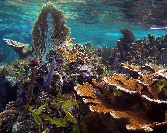 Gorgeous underwater scenery picture of playa corona corona beach club cozumel tripadvisor