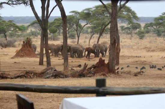 سانكتشويري سوالا: Elephants of Swala