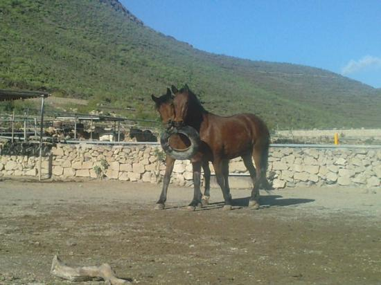 Horse Riding Adventures in Tenerife: Happy relaxed horses