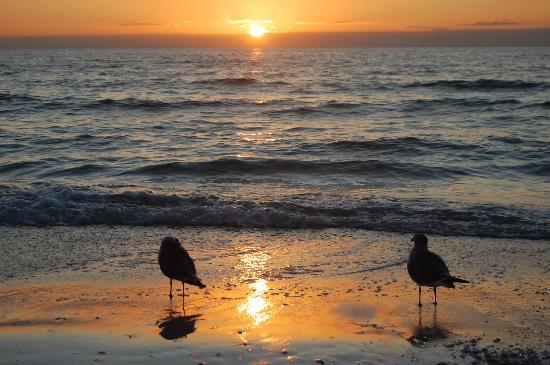 Tropical Beach Resorts: Even the seagulls were quiet
