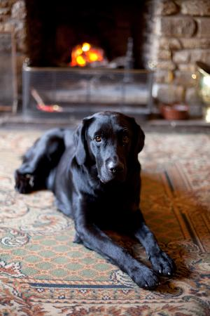 The Angel at Burford: Dogs welcome