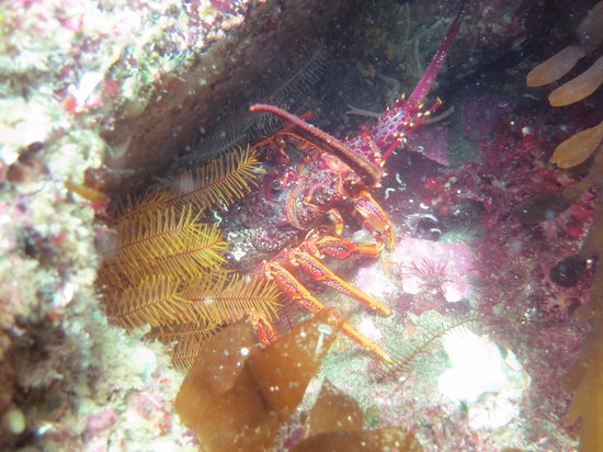 Tinderbox Marine Nature Reserve