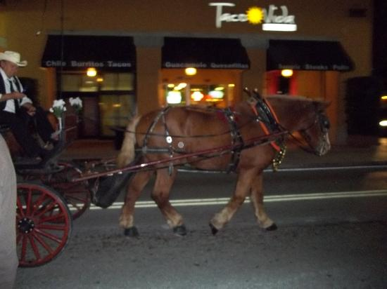 West Palm Beach, FL: Horse and carriage rides