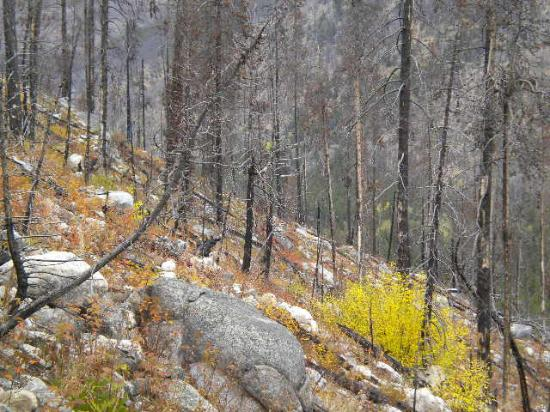 Basin Creek Lakes Trail : fall colors along the trail