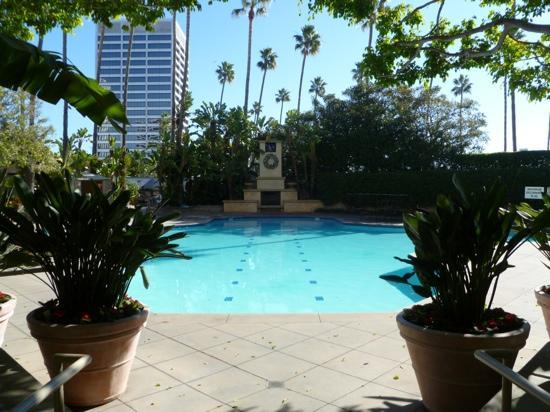 Island Hotel Newport Beach : gorgeous pool