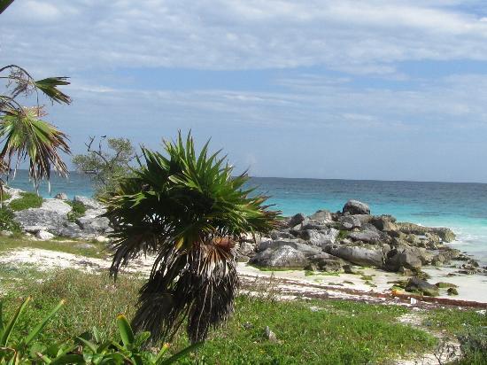 Organic Yoga Mexico: More Beaches