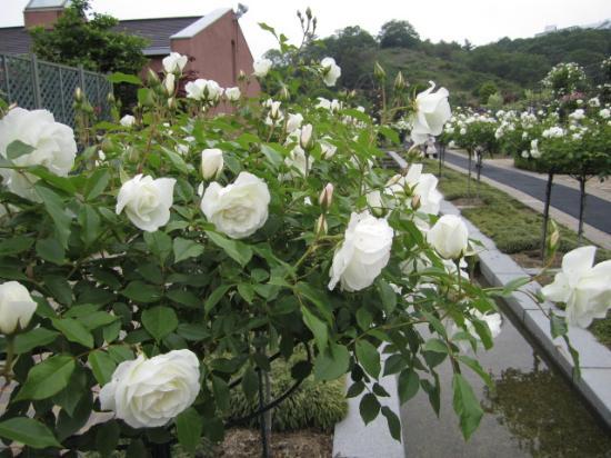 Hana Festa Memorial Park: 5月6月に是非出かけてみてください