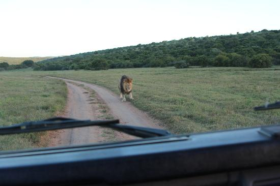 Addo Afrique Estate: Game Drive booked via MOSES