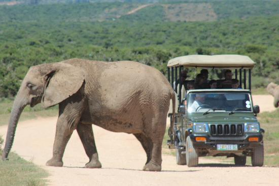 Addo Afrique Estate: ADDO Park 20 minutes away