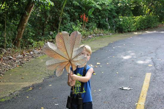 Tulemar Resort : umbrella