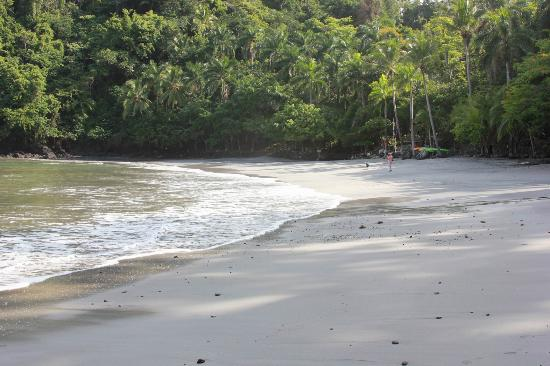 Tulemar's Buena Vista Luxury Villas: beach in the morning