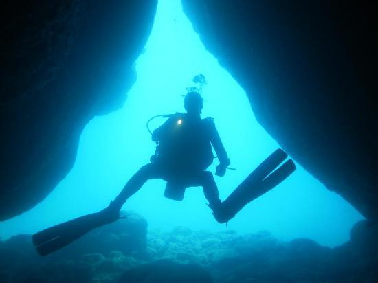 Cook Island Divers: dive dive dive
