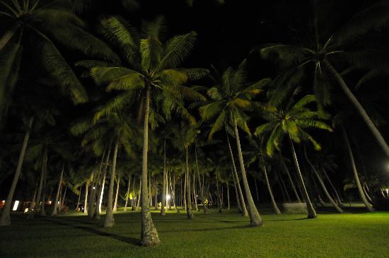Tahaa, Franska Polynesien: The grove of Coconut Palms at night
