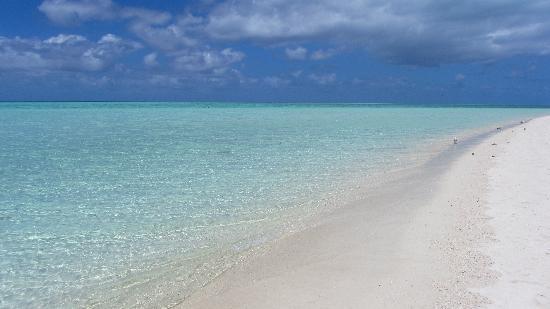 Heron Island Resort: Beach
